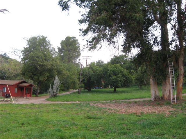 Starr Ranch BNOW cavity tree and ladder